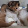 生まれたての子猫。ただいま授乳中、オスメスいます