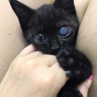 愛媛県松山市保健所から保護した仔猫7番
