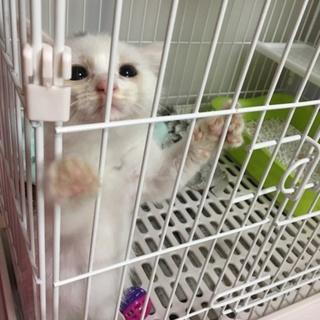 愛媛県松山市保健所から保護した仔猫3番