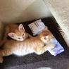 子猫 二匹