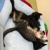 黒猫チビのドキンちゃん、 名古屋から サムネイル2