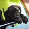 陽(よう):琉球犬Mix?垂れ耳の可愛い男の子