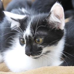 【尾張旭市】で第24回きーちゃんち猫の譲渡会