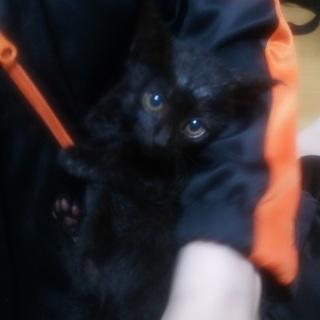 3日間うちの前で1匹で生きてた子猫ちゃんを保護