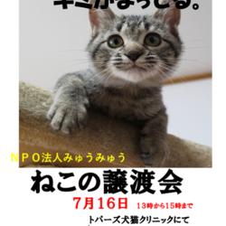 第5回NPO法人みゅうみゅうの譲渡会!!