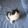 ふわもこ白黒男子の元気な子猫です☆ サムネイル2