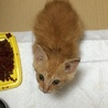 緊急募集保護猫
