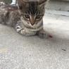 子猫です!