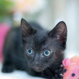 クロヒョウみたいな黒猫