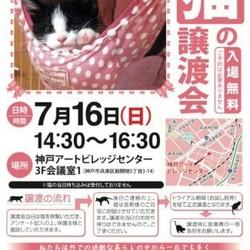 猫の譲渡会in神戸アートビレッジセンター