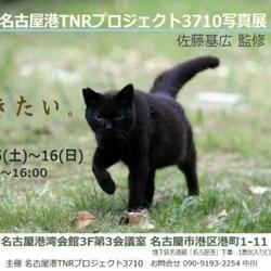 名古屋港 TNR プロジェクト 3710 写真展