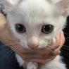 (動画あり)生後2ヶ月☆兄妹子猫①シロクロ
