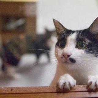 【東京】飼いやすいおとな猫。好奇心旺盛な女の子。