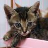 可愛い可愛い子猫 その4