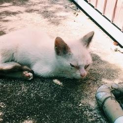 生まれて間もない子猫が隣の家との間にいます。