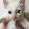 白子猫ちゃん