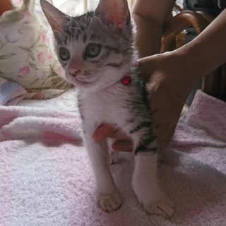 野良子猫保護してます。赤ちゃん