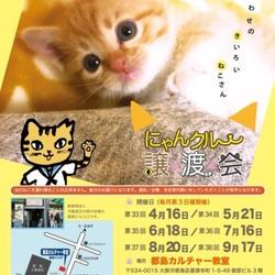 7月16日(日)第37回にゃんクルー譲渡会in大阪市都島区