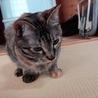 cat08 さん