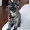 サビ猫♪ 2ヶ月位