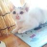 白ぶちくんと三毛ちゃん(仔猫2ヶ月) サムネイル4