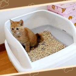 トイレを使ううちの茶トラ猫です