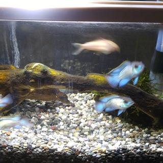 多種多様な熱帯魚の里親募集!