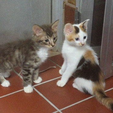 かわいいチビイリマ。左はご近所さんに引き取られたオスの兄弟デール