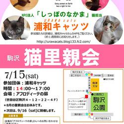 Eva主催  駒沢「猫里親会」