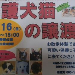 保護犬・猫の譲渡会