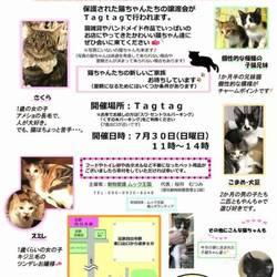 電車でも行ける!猫譲渡会☆猫雑貨も販売!
