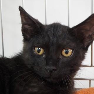 黒ネコ♪りく♪5ヶ月