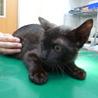 黒ネコ♪りく♪5ヶ月 サムネイル5