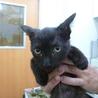 黒ネコ♪りく♪5ヶ月 サムネイル6