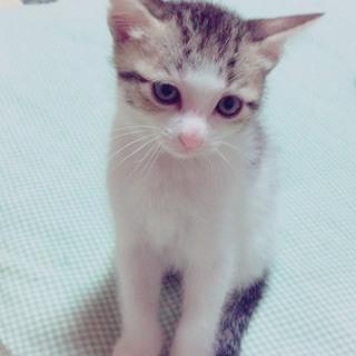 生後2ヵ月の子猫ちゃん。4匹とも可愛いですよ。