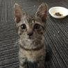 キジトラ子猫です【里親決定ありがとうございました】