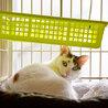 美形純和風三毛猫 サムネイル2