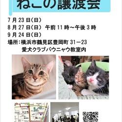 横浜  つるみ・猫のカギしっぽ譲渡会vol.36