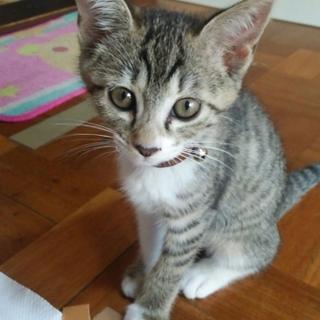 誰かこの猫ちゃんを欲しい方いませんか?