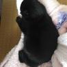 黒猫 サムネイル6