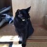 黒猫 サムネイル7