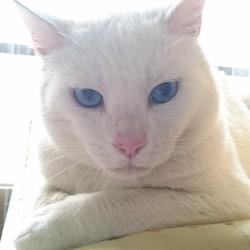 【里親募集中】猫エイズキャリアに理解のある方へ