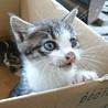 子猫5匹の里親様募集します。 サムネイル2