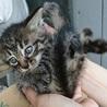 子猫5匹の里親様募集します。 サムネイル4