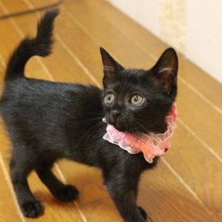 小さな可愛い黒猫マリンちゃんです