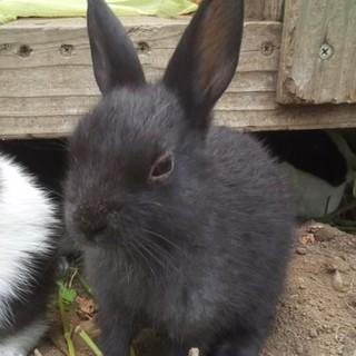 6月生まれのウサギさん