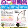7月22日(土)地域猫から社会猫へ 四谷猫廼舎(ねこのや)里親会(ボランティアも募集中)