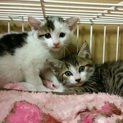 7月22日(土)地域猫から社会猫へ 四谷猫廼舎(ねこのや)里親会(ボランティアも募集中) サムネイル2