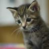 可愛い子猫の3兄弟です!