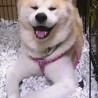 とみちゃん 穏やか、ゆったり過ごす 室内限定愛玩犬 サムネイル7